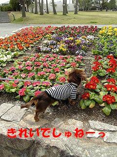 Image450.jpg