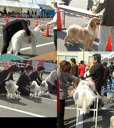 dogshow.jpg
