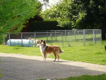エマと小犬達