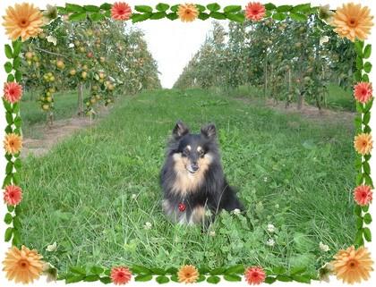 りんご畑の横が会場