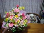 flowergyu-s.jpg