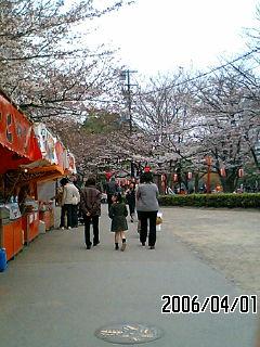 2006sakura2.jpg