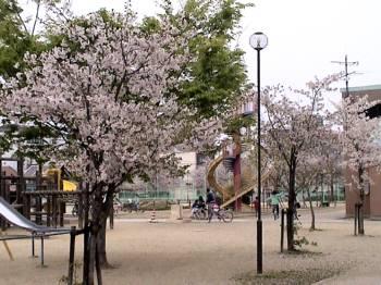 2007sakura3.jpg