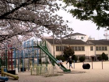 2007sakura7.jpg