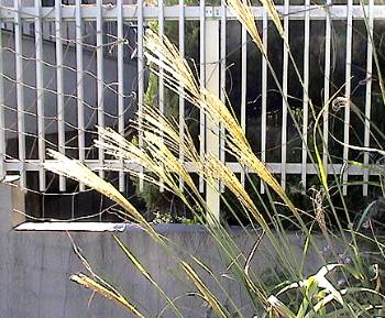 2007susuki.jpg