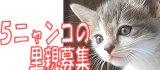 大阪発☆5ニャン子里親募集。優しい里親さんを探しています。