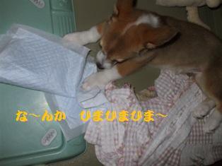 Rin-070912-2.jpg