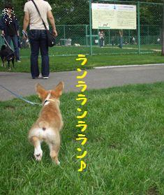 Rin070916-2.jpg