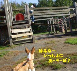 Rin071006-2.jpg