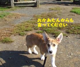 Rin071006-3.jpg