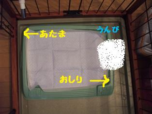 Rin071010-2.jpg