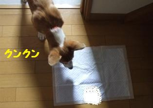 Rin071010-5.jpg