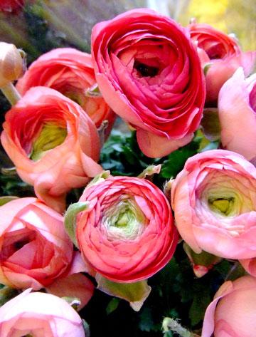 風邪の花ピンク