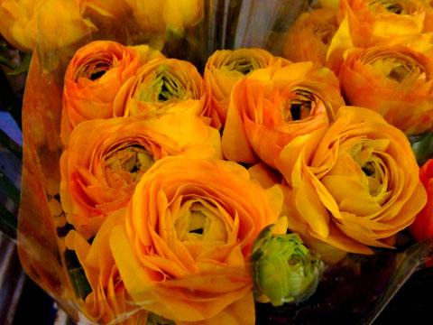 風邪の花オレンジ