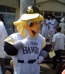 hawks089
