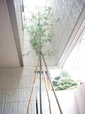 筒井街かど☆ガレージ奥の竹