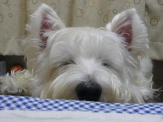 おやすみ~!