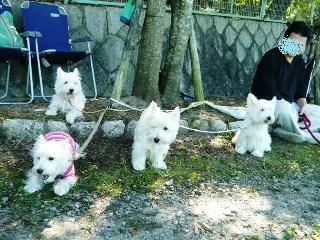 白犬応援団