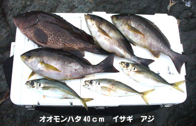 20070616chouka-1.jpg