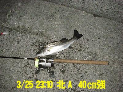 suzukikunn_kitaa_3.25_45_1.jpg