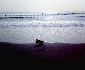 20061107091604.jpg