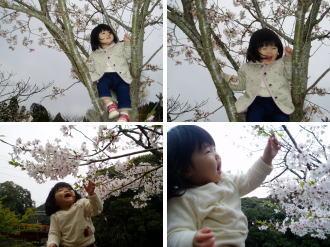 桜=あたち=美しい。。