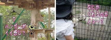 人情味あふれる小動物園。