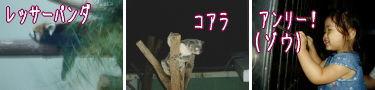 夜の動物園もエキサイティング!