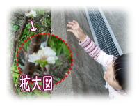 …もう桜が!?