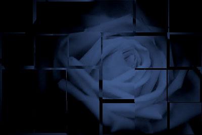 壊れた薔薇