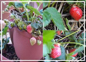 sberry1