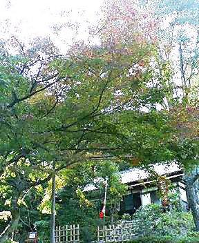 近江神宮の境内のもみじ