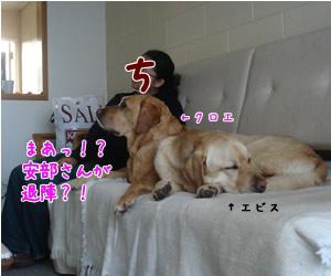 TV鑑賞中