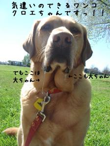 気遣い犬、クロエちゃん