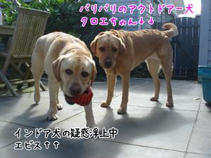 アウトドアー&インドアー犬