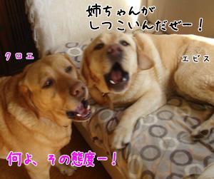 shashin4