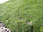 斜面のお花畑