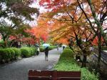 秋真っ盛り