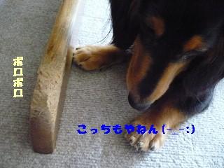 s-P1000246.jpg