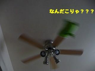 s-P1000397.jpg