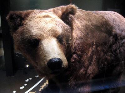 科博のクマ