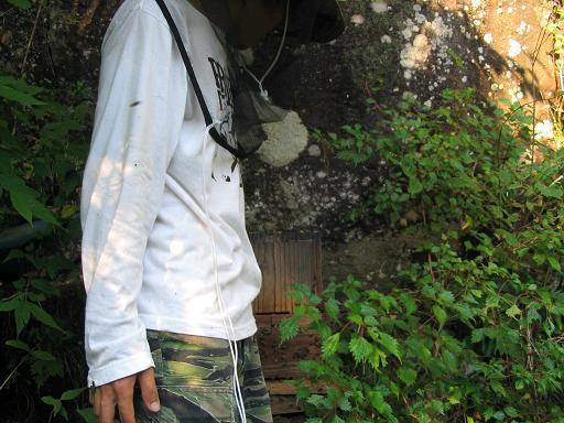 早い採蜜(滝下) 004