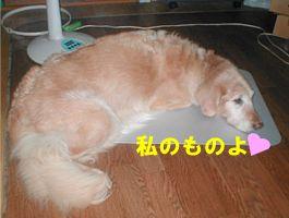 060827choko.jpg