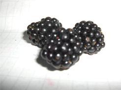 2007.07.26berry.jpg