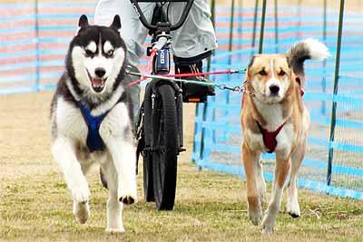 石川2dog