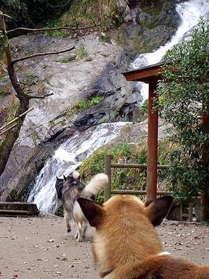 滝へ向かう3頭