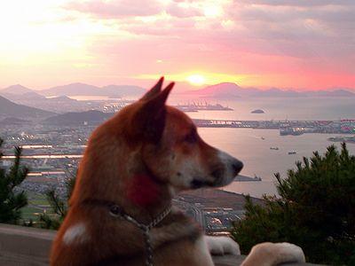 夕日を見るジョン