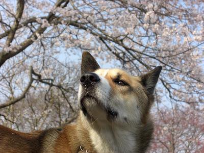 春ですね~