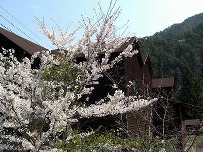 セミナー桜