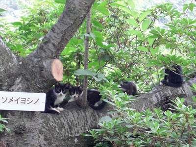 桜に生る子猫の実